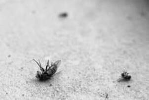 Fly Infestation in Your Backyard and Home